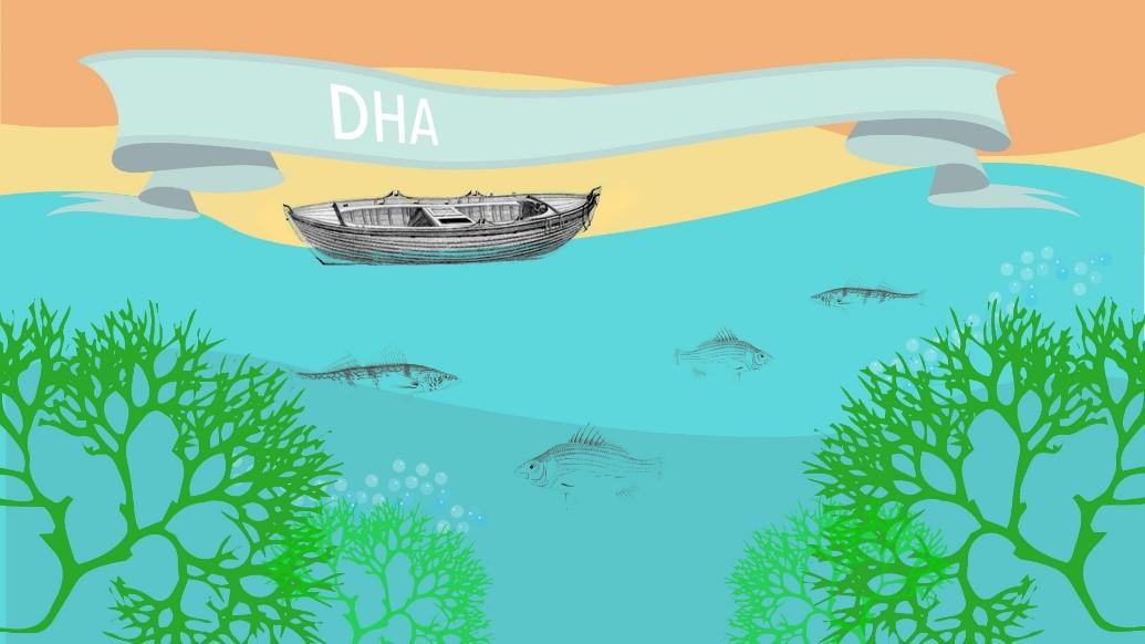 Co jeść, by nie dopuścić do niedoboru kwasów tłuszczowych DHA?