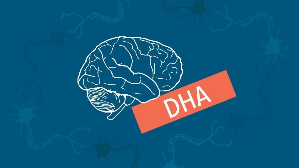 Kwas DHA receptą na prawidłowe funkcjonowanie mózgu?