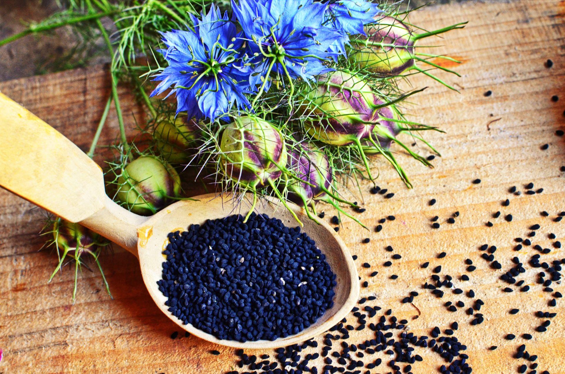 Czarnuszka - właściwości zdrowotne oleju z czarnuszki i ziaren z czarnuszki