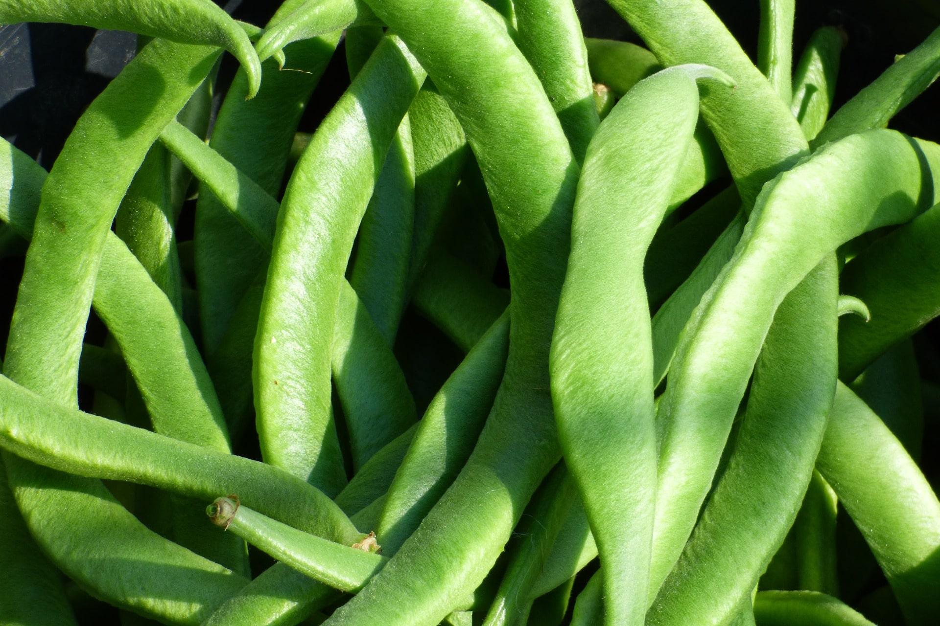 Nasiona roślin strączkowych w diecie
