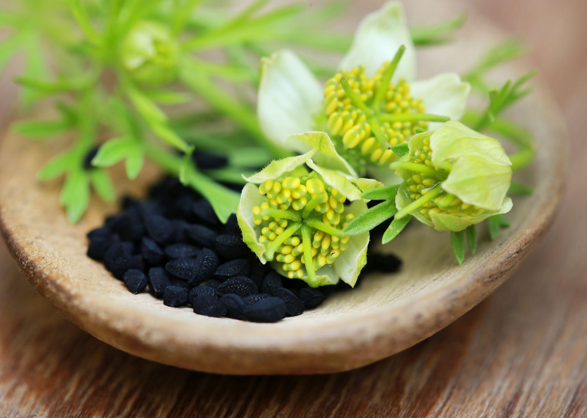 Olej z czarnuszki i ziarna z czarnuszki są stosowane w diecie przy wysokim cholesterolu.